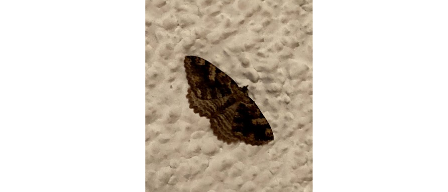Image of Moth on ceiling