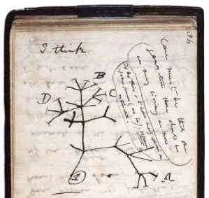 Darwin writes -I think- above his first notebook sketch of an evolutionary tree