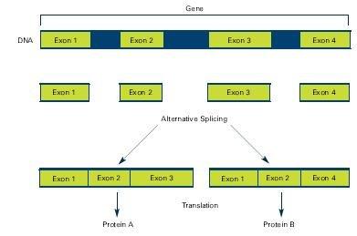 Multiple codes in dna altspliceg ccuart Images