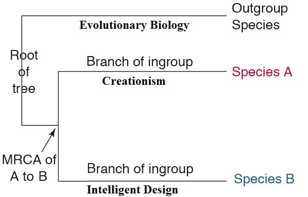 essay on creationists Creation versus evolution: we compare the theory of evolution with the bible's creation account in easy-to-understand terms, using evidence from the fields of paleontology, geology, biology.